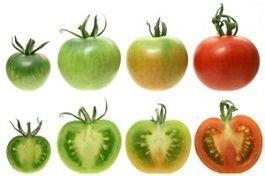 aspecto-fruta