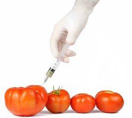 transgenicos-fruta-verdura