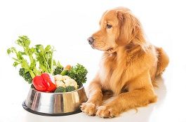 frutas-y-verduras-pueden-comer-perros